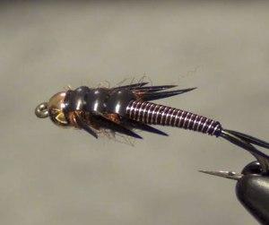 stonefly-nymph2