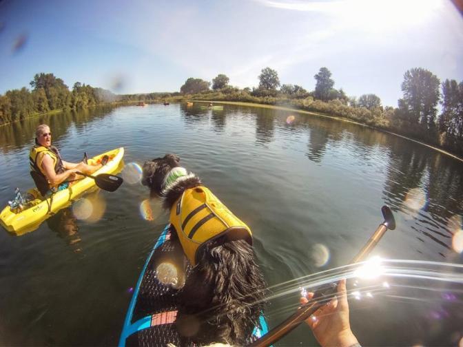 Ripp, rockin' his Ruff Wear Life vest on the Willamette River, Central Oregon Valley