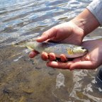 That First Fly Rod & A Boy's Journey To Fly Fishing