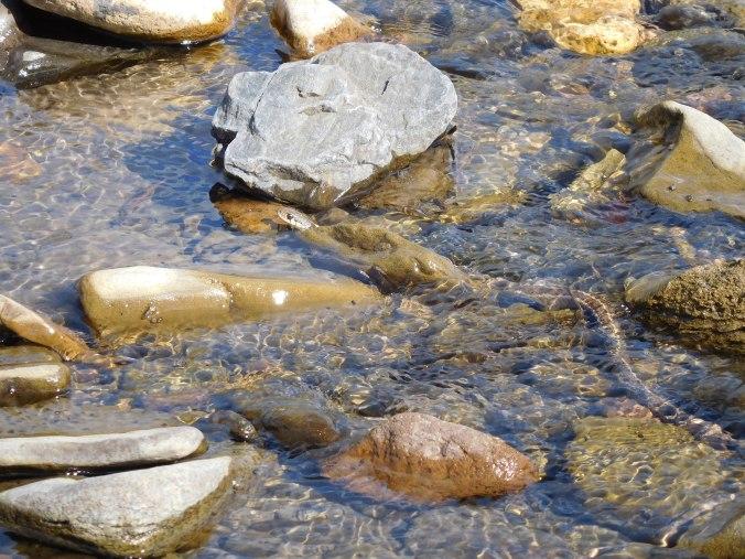 snakeinwater-04.jpg