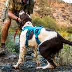 Fly Fishing With Your Four Legged Friend