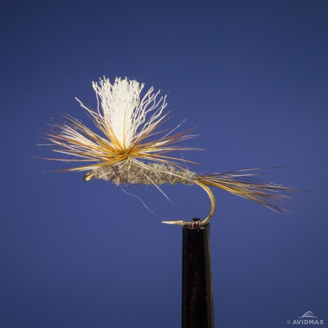 parashute-adams-blog