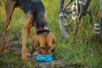 Ruffwear Quencher II Dog Bowl Product Review Winner