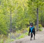 Ruffwear Front Range Dog Harness Product Review Winner
