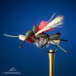 Amys-Ant
