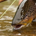 Fundamental Fly Fishing Terminology